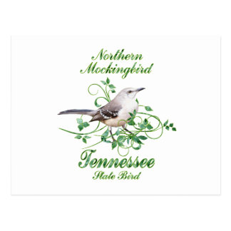Mockingbird Tennessee State Bird Postcard