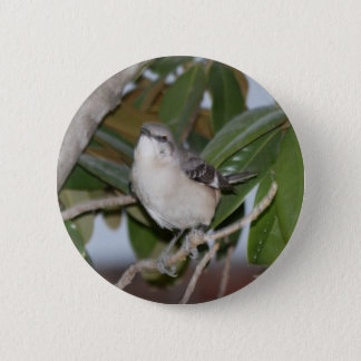 Mockingbutton - Northern Mockingbird on Magnolia Button