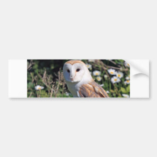 Mod Chic Classy Destiny Owl Bumper Sticker