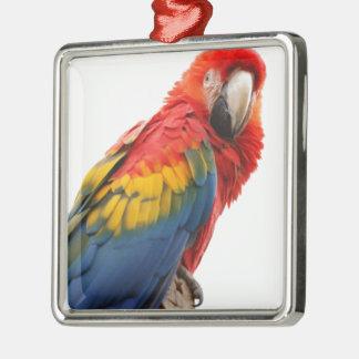 MOD con clase elegante del Macaw colorido tropical Adorno Cuadrado Plateado