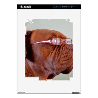 Moda Dogue de Bordeaux iPad 3 Skins