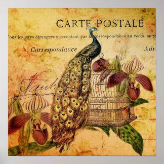 moda floral de París del pavo real del vintage Impresiones