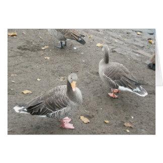 Model Duck Card
