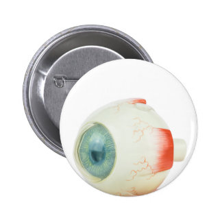 Model human eye isolated on white background.jpg button