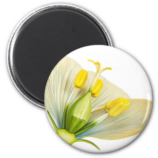 Model of flower with stamens and pistils on white magnet