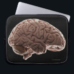 "Model of human brain, studio shot computer sleeve<br><div class=""desc"">AssetID: 114850733 / {Mike Kemp} / Model of human brain, studio shot _x000D_ _x000D_ The human brain has the same general structure as the brains of other mammals , but is larger than expected on the basis of body size among other primates . Estimates for the number of neurons (nerve...</div>"