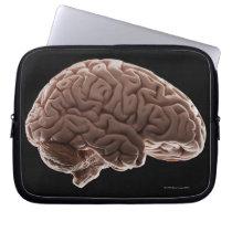 Model of human brain, studio shot computer sleeve