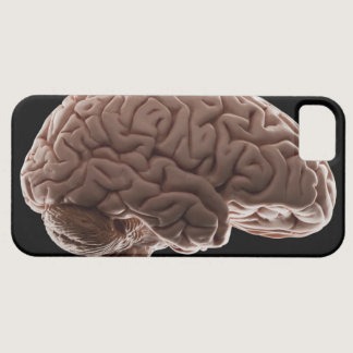 Model of human brain, studio shot iPhone SE/5/5s case