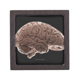 Model of human brain, studio shot jewelry box