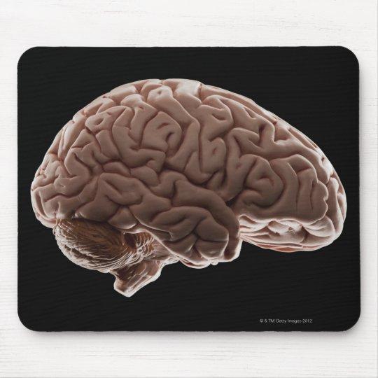 Model of human brain, studio shot mouse pad