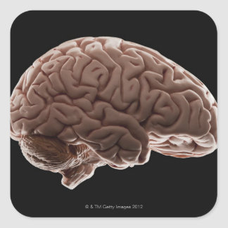 Model of human brain, studio shot square sticker