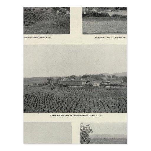 Model Vineyards, California Postcard