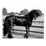 Modelado del caballo tarjeta postal