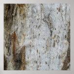 Modelo 4 de la corteza de árbol impresiones