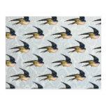 Modelo azul de los pájaros del trago del vintage tarjetas postales