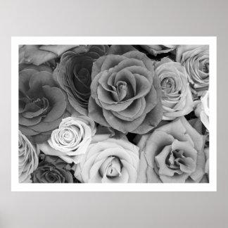 Modelo blanco y negro de los rosas grande posters