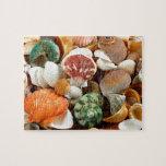 Modelo colorido de los seashells puzzle