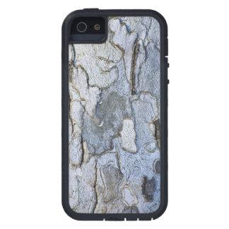 Modelo de la corteza de árbol del sicómoro iPhone 5 carcasa