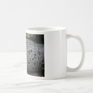 Modelo de la piel de la anguila tazas de café