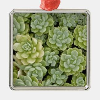 Modelo de la planta de la uva de gato ornamento para arbol de navidad