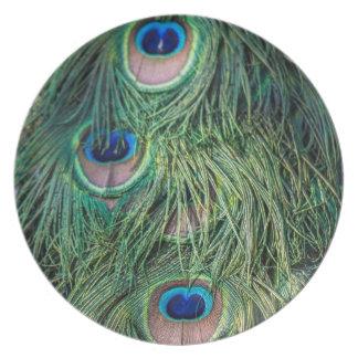 Modelo de la pluma del pavo real platos