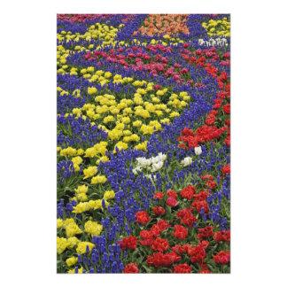 Modelo de los tulipanes y de las flores del jacint cojinete