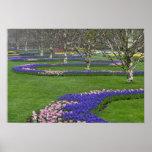 Modelo de los tulipanes y de las flores del jacint impresiones