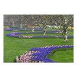 Modelo de los tulipanes y de las flores del jacint fotografía