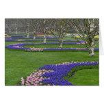 Modelo de los tulipanes y de las flores del jacint tarjetas
