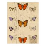 Modelo de mariposas elegante francés del vintage tarjetas postales