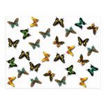 Modelo de mariposas tarjetas postales