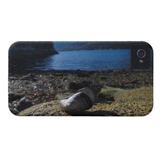 Modelo de Shell del mejillón iPhone 4 Case-Mate Protectores