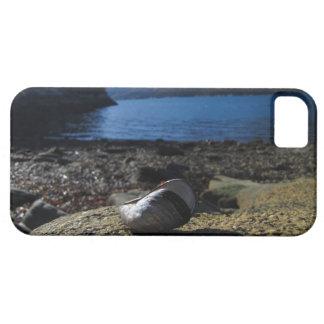Modelo de Shell del mejillón iPhone 5 Case-Mate Cobertura