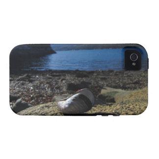 Modelo de Shell del mejillón Case-Mate iPhone 4 Carcasa