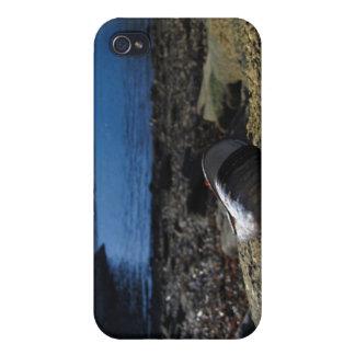 Modelo de Shell del mejillón iPhone 4/4S Carcasas