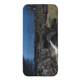 Modelo de Shell del mejillón iPhone 5 Protectores