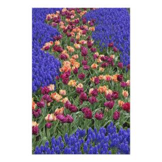 Modelo de tulipanes y de flores del jacinto de uva cojinete