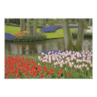 Modelo de tulipanes y de flores del jacinto de uva fotografías