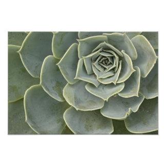 Modelo del cactus fotografía