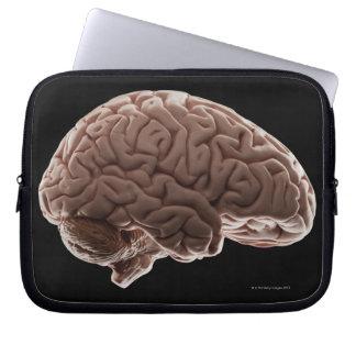 Modelo del cerebro humano, tiro del estudio funda portátil