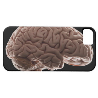 Modelo del cerebro humano, tiro del estudio iPhone 5 fundas