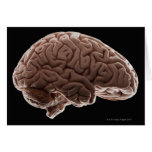 Modelo del cerebro humano, tiro del estudio tarjetas