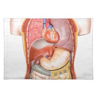 Modelo del cuerpo humano con los órganos aislados mantel individual
