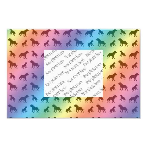 Modelo del dogo del arco iris fotos