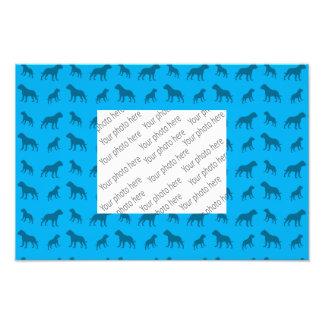 Modelo del dogo del azul de cielo impresión fotográfica