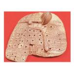 Modelo del hígado de una oveja postal
