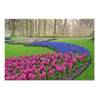 Modelo del jacinto de uva, tulipanes, y 2 cojinete