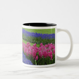 Modelo del jacinto de uva, tulipanes, y taza de café