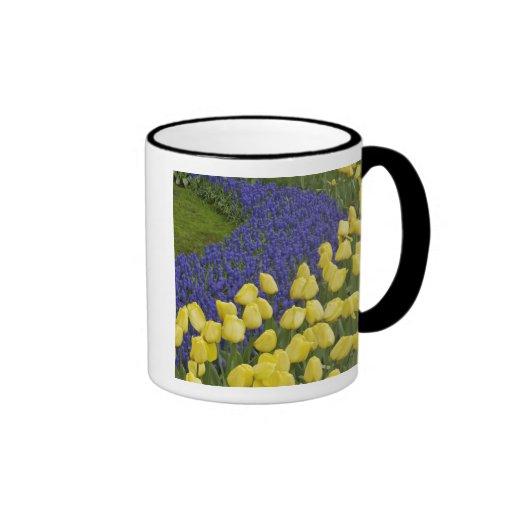 Modelo del jardín de las flores del jacinto de uva taza de dos colores