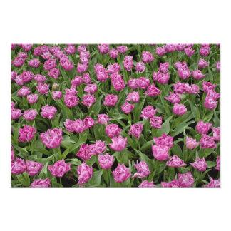 Modelo del jardín de los tulipanes, jardines de Ke Cojinete